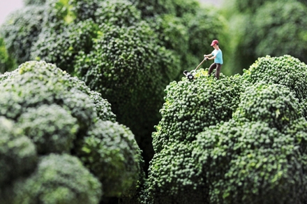 Broccoli Lawns and Cupcake Sledding: Photographer Christopher Boffoli Plays With His Food