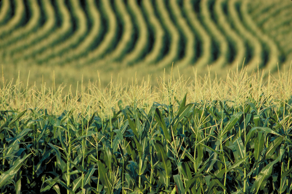 Changes in the US Corn Industry