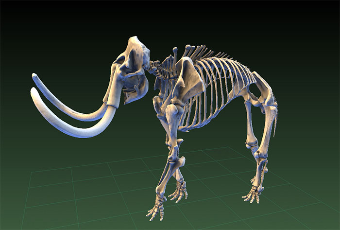 The Smithsonian embarks on digitizing their artifacts in 3D